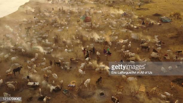 Aerial view of long horns cows in a Mundari tribe cattle camp full of smoke Central Equatoria Terekeka South Sudan on February 11 2020 in Terekeka...