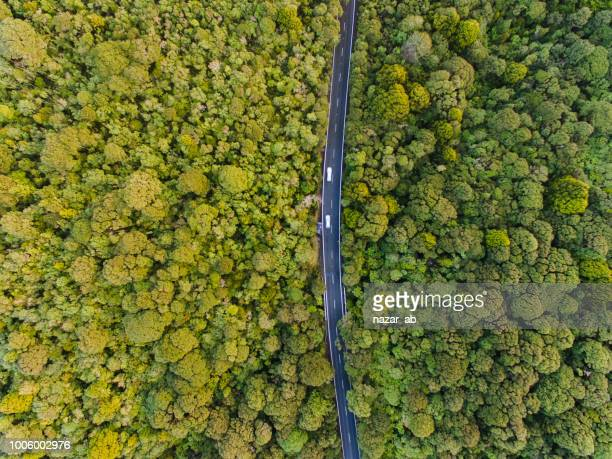 aerial view of long road cutting through forest. - new zealand stock pictures, royalty-free photos & images