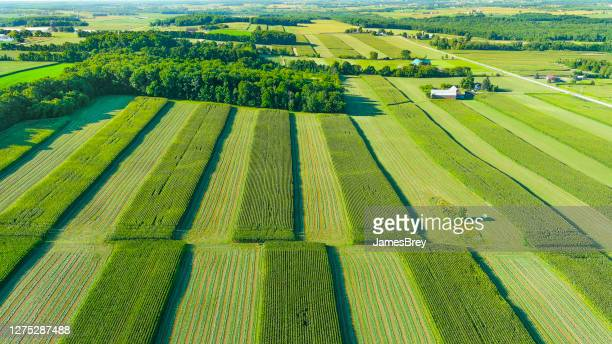 aerial view of lush green crops in farm fields - wisconsin stock pictures, royalty-free photos & images