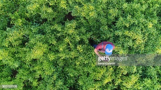 Vista aérea del hombre campesino con tableta digital