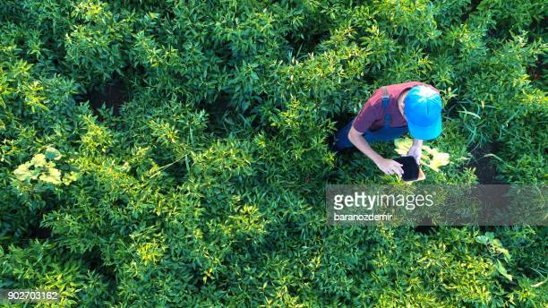 Aerial view of male farmer with digital tablet computer