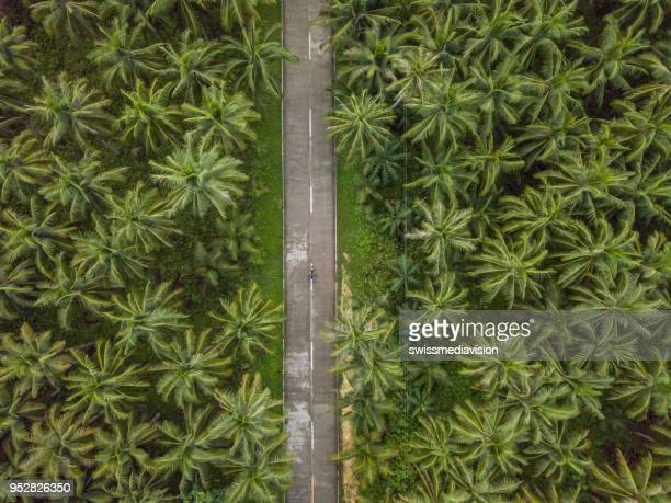 aerial view of man driving motorbike in palm trees road in the philippines - philippines stock pictures, royalty-free photos & images