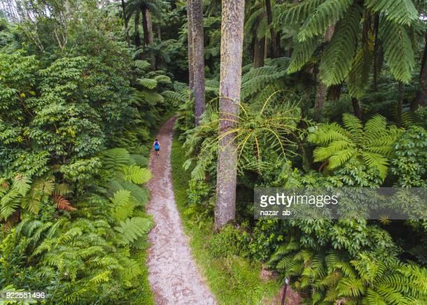 Aerial view of man running through wood.