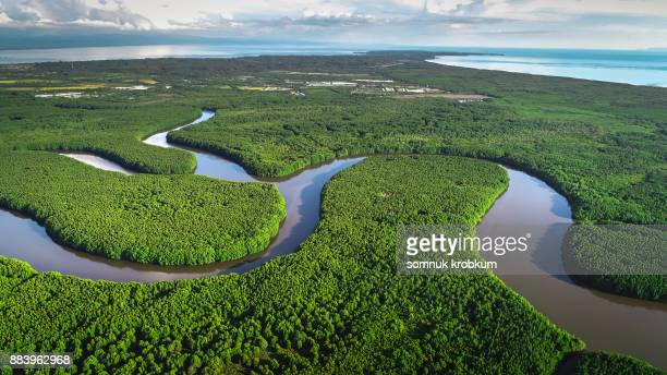 Aerial view of mangrove forest in wetland in rainy season