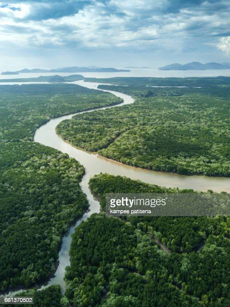 aerial view of mangrove tree forest and river at ranong, thailand - hoch position stock-fotos und bilder