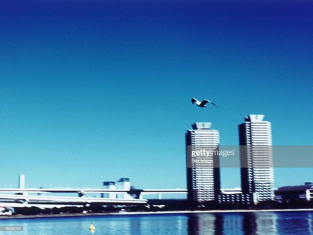 Aerial View of Minato-ku, Tokyo, Japan : Stock Photo