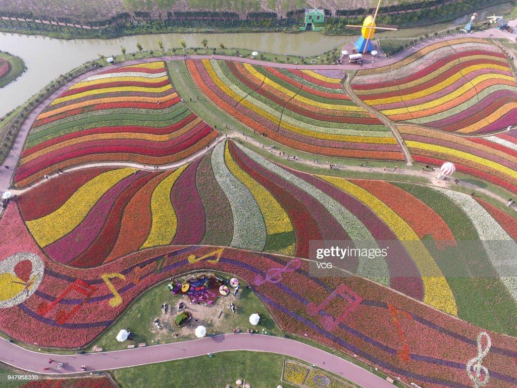 Tulips In Full Blossom In Yancheng : Nachrichtenfoto