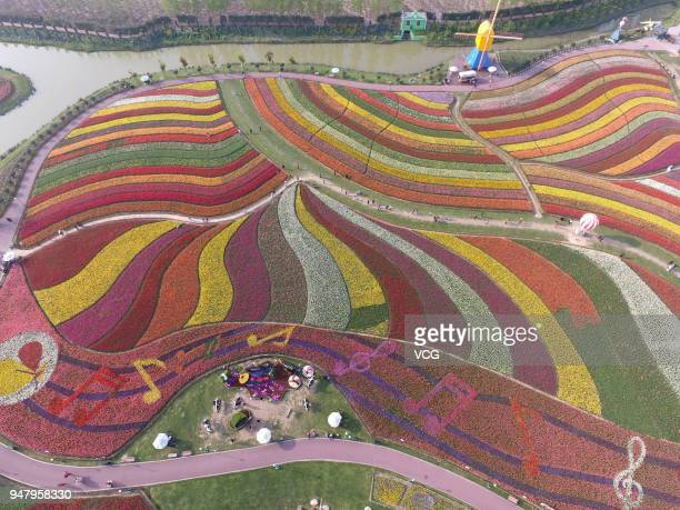 Aerial view of more than 30 million tulips of over 300 kinds in full blossom at the tulip park of Dafeng District on April 17 2018 in Yancheng...