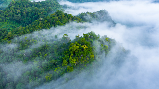 Aerial view of morning mist at tropical rainforest mountain, background of forest and mist, Aerial top view background forest. 1176511794