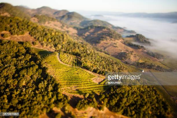 Aerial view of Napa valley and vineyards