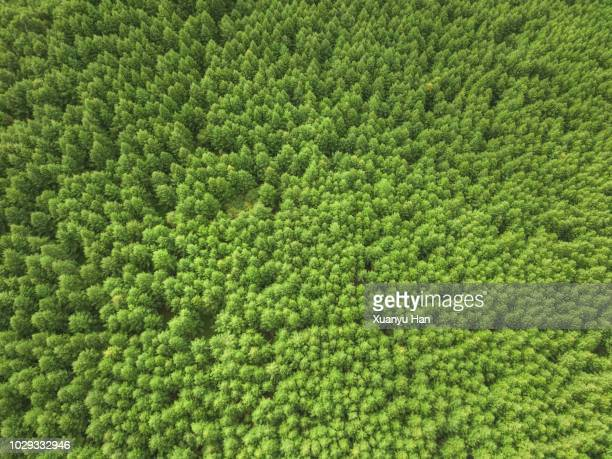 aerial view of nature forest - pine woodland stock pictures, royalty-free photos & images