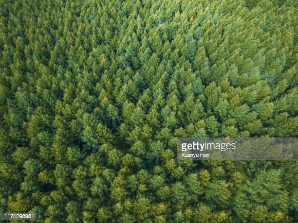 aerial view of nature forest - tree farm stock pictures, royalty-free photos & images