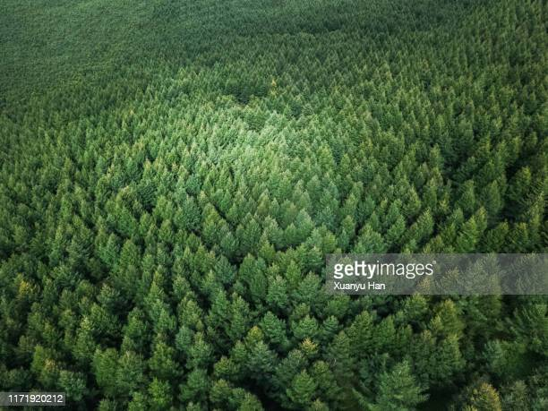 aerial view of nature forest - wald stock-fotos und bilder