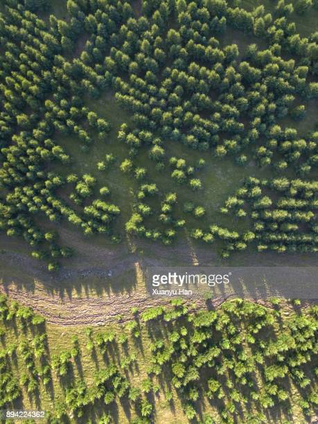 Aerial View of Nature Forest