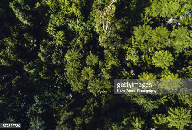 Aerial View Of New Zealand Native Forest.