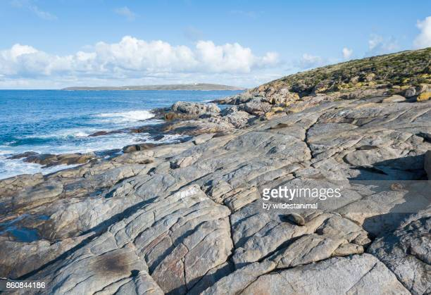 aerial view of north neptune island showing fur seals and sea lions resting in the afternoon sun, neptune islands, south australia. - ilha netuno - fotografias e filmes do acervo
