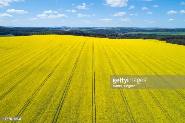 aerial view of oilseed rape field in bloom, springtime. saale-orla-kreis, schleiz, thuringia, germany, europe. - キャノーラ ストックフォトと画像