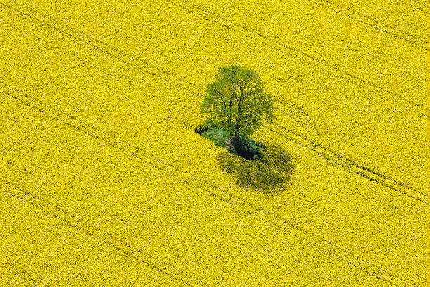 Aerial View Of Oilseed Rape Field Located In Germany Wall Art