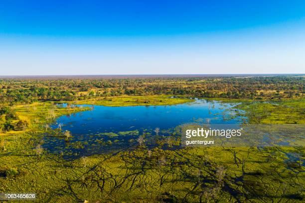 aerial view of okavango delta, botswana, africa - okavango delta stock photos and pictures