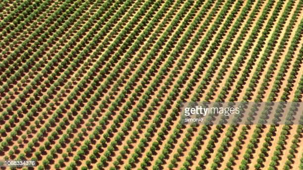 カリフォルニア州の果樹園の木の空撮 - 果樹園 ストックフォトと画像