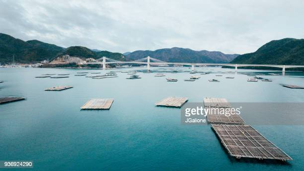 aerial view of oyster traps - aquaculture stock pictures, royalty-free photos & images