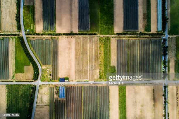 Aerial view of paddy field and road.