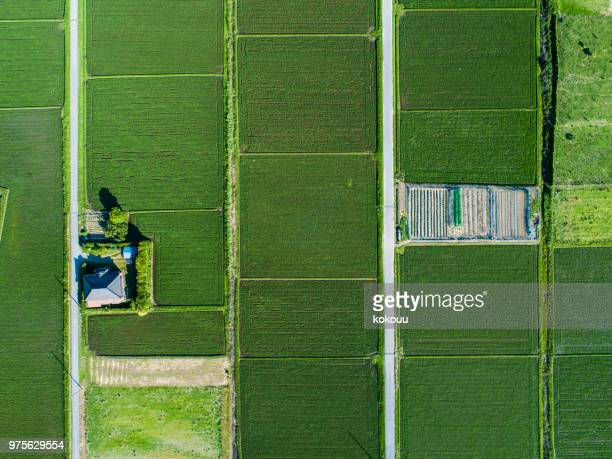 aerial view of paddy field - rice paddy stock pictures, royalty-free photos & images