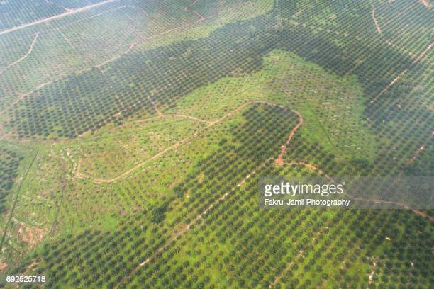 Aerial view of Palm Oil Plantation Field in Pahang, Malaysia