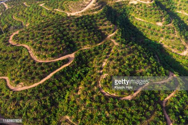 aerial view of palm plantation on hill in east asia - palm oil stock pictures, royalty-free photos & images