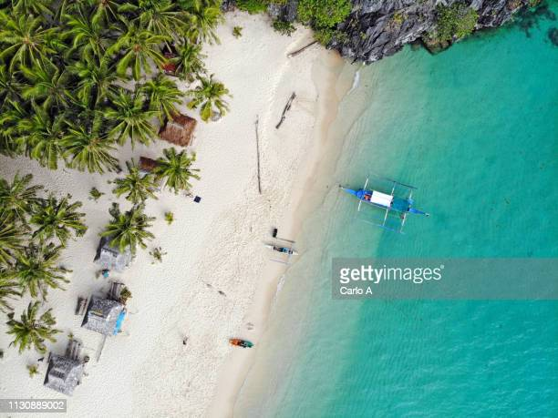 aerial view of palm trees and beach - philippinen stock-fotos und bilder