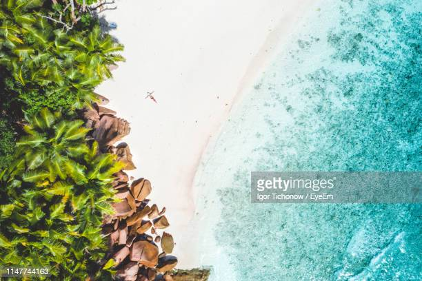 aerial view of palm trees at beach - la digue island stock pictures, royalty-free photos & images