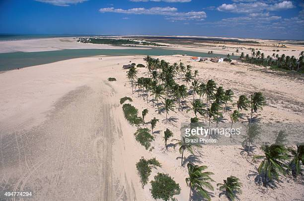 Aerial view of palm trees in sand dunes Ceara State shore near Fortaleza tropical beach Brazil