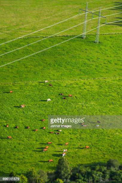 Aerial view of pasture with flock of sheep grazing