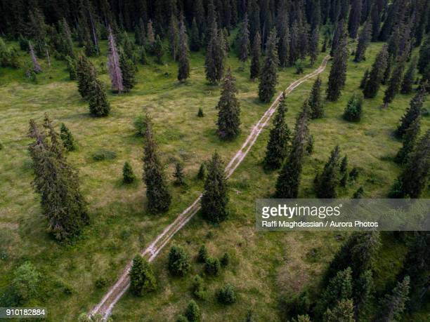 Aerial view of path among forest of spruces (Picea Abies) in summer, Le Chenit, Vaud, Switzerland