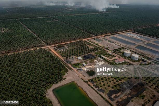 Aerial view of peatland and forest fires next to palm oil plantation during fire patrol by Indonesian national board for disaster management on...