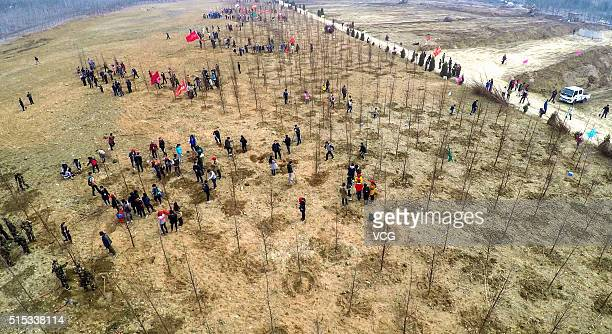 Aerial view of people planting trees along the bank on March 12, 2016 in Rizhao, Shandong Province of China. Over 50,000 people gathered and planted...