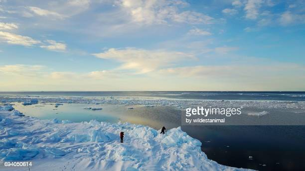 aerial view of photographers taking photos of two walruses on floating sea ice in the distance. - ice floe stock pictures, royalty-free photos & images