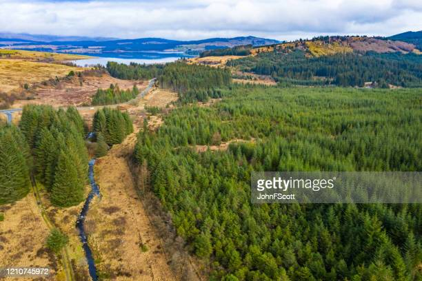 aerial view of pine forest in a remote scottish rural location - johnfscott stock pictures, royalty-free photos & images