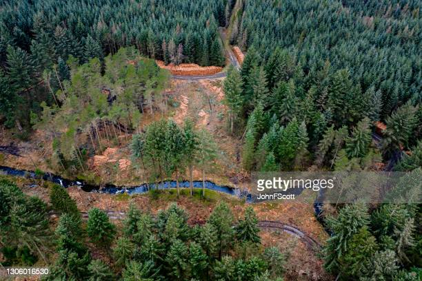 aerial view of pine forest ready for harvest - johnfscott stock pictures, royalty-free photos & images