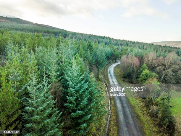 Aerial view of pine forest, The Glen of Aherlow, Tipperary, Ireland.