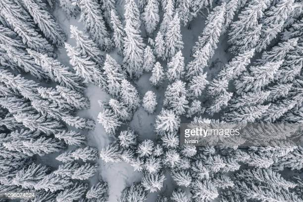 aerial view of pine trees covered with snow - innevato foto e immagini stock
