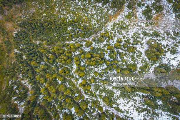 aerial view of pine trees, naches, washington state, usa - カスケード山脈 ストックフォトと画像
