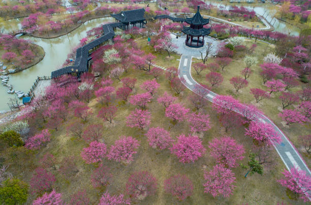 CHN: Plum Blossoms In Yancheng