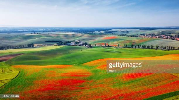Aerial view of poppies on green hills, Moravia, Czech Republic