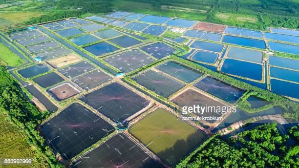 Aerial view of prawn farm in rainy season