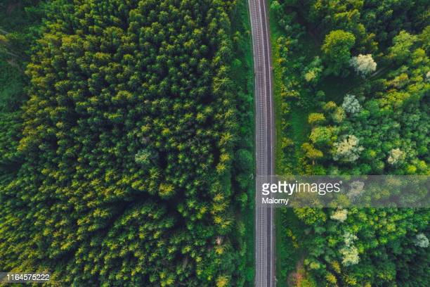 aerial view of railroad tracks amidst green trees in forest - bahngleis stock-fotos und bilder