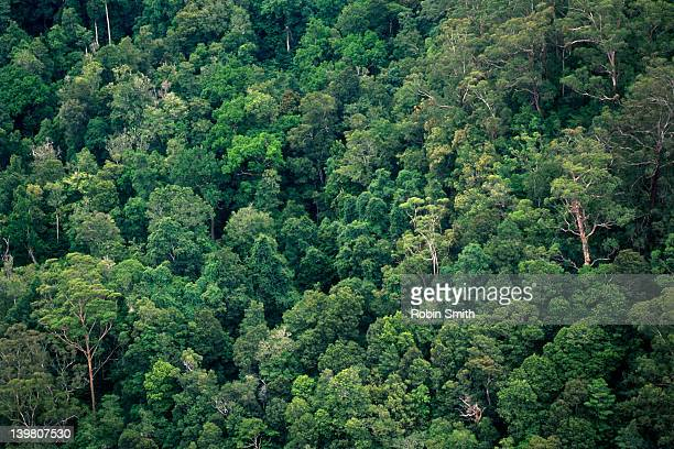 Aerial view of rain forest, Morton NP, Southern Highlands, NSW
