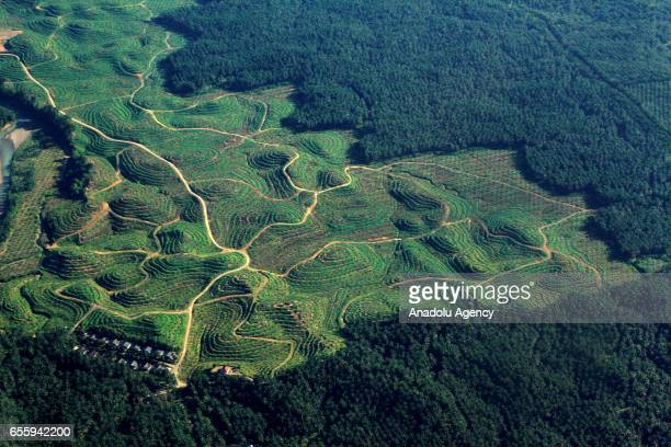 Aerial view of rainforest Leuser Mountain National Park which is one of the national parks listed in UNESCO as a World Heritage Site the Tropical...