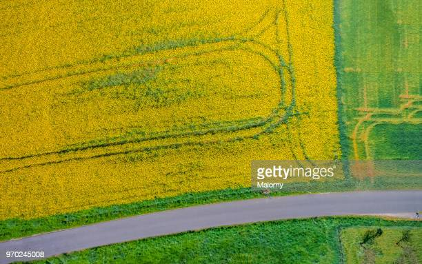 Aerial view of rape field and road. Directly above. Drone view.