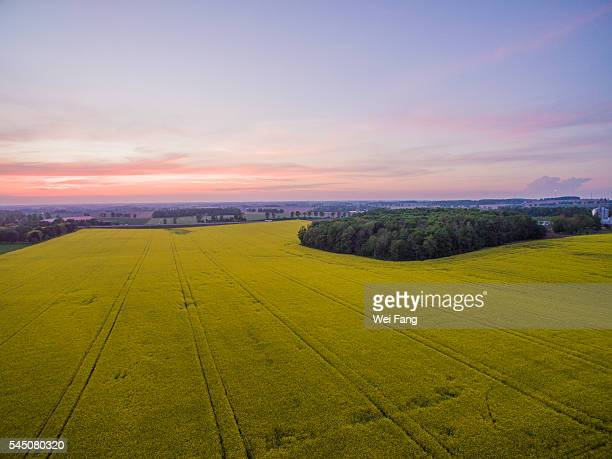 aerial view of rapeseed field - london ontario stock pictures, royalty-free photos & images